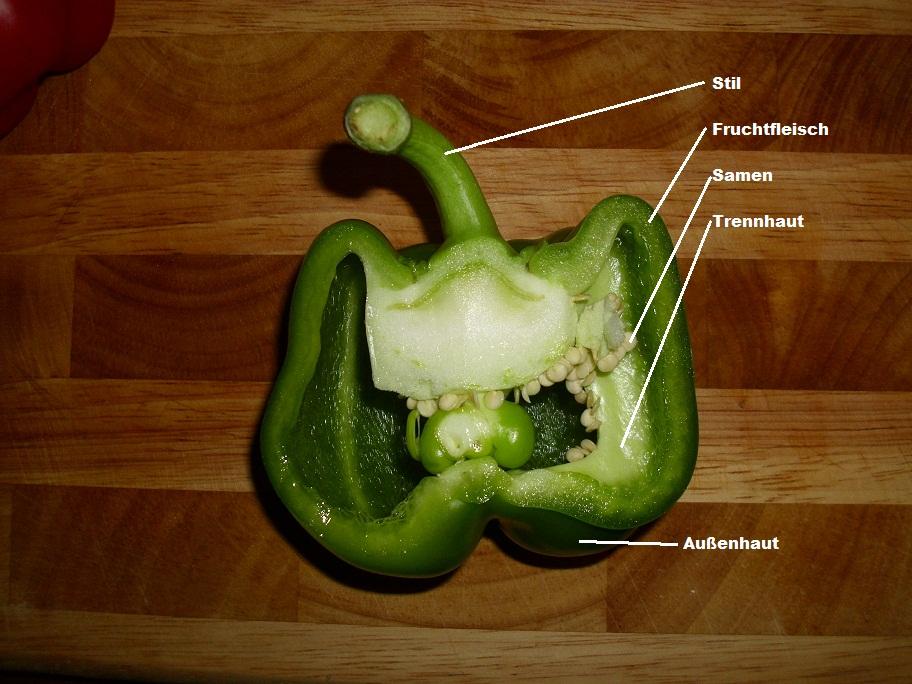 Querschnitt durch eine Gemüsepaprika