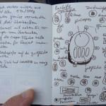 Meine Raclette-Notizen